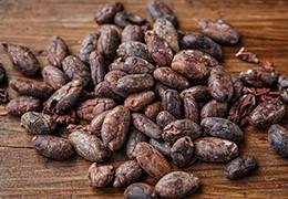 Le Cacao, une médecine du cœur